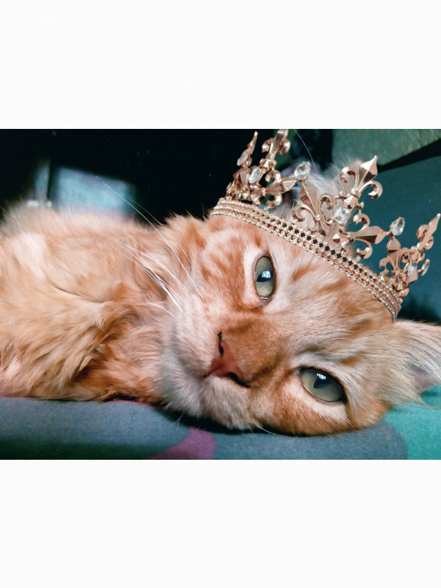 He's Parker. ✨💕 Instagram: @margo34277 Pic inspired in @kena13  #freetoedit #cat #crown #pet #mascota #love #gato