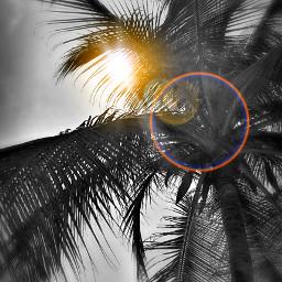 home palmbeach blackandwhite sunset goodvibesonly