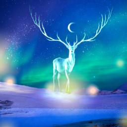freetoedit nightsky deer luminous fantasybackground ircskyloversdelight
