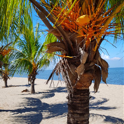 palmtrees palmbeach home beautifulday goodvibes