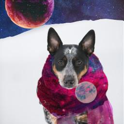 perro dog galaxy galaxyedit freetoedit