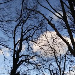 ağaçlar ağaç tree trees photo freetoedit pctree