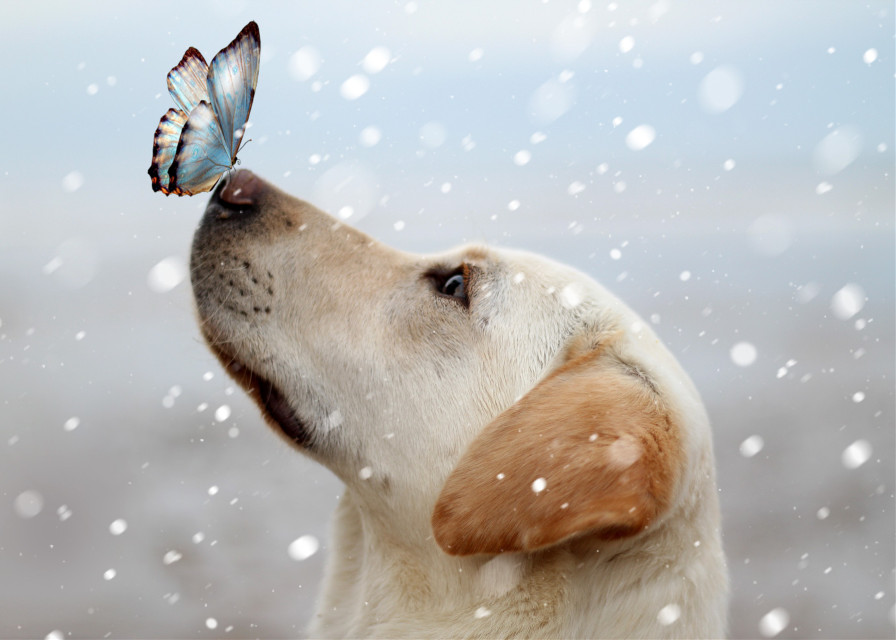 #freetoedit #winterseason  #snow #white #butterfly #dog #remixit