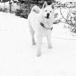 winter snow nature animals pets schwarzweissfotografie pcsnow