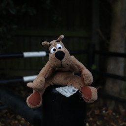 dog toy myview outandabout freetoedit