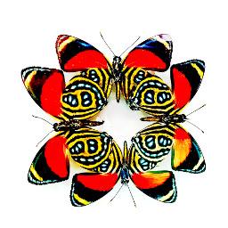 freetoedit freebies butterflies