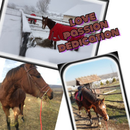 horsie love passion dedication