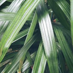 freetoedit green leaf ilovegreen greenlove