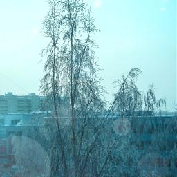 freetoedit myphoto myedit tree snow