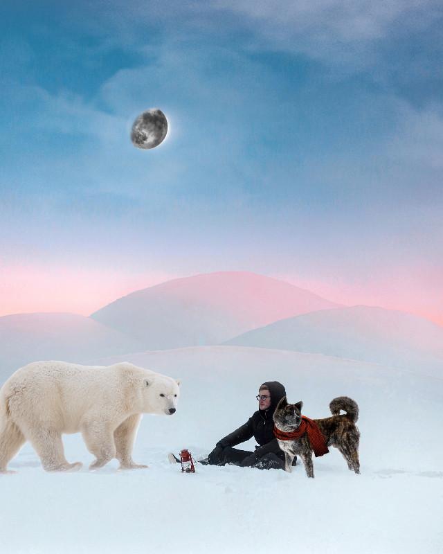 #freetoedit  #osopolar #remix #polonorte #husky #huskies #nieve #dog #bear #northpole