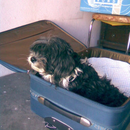 myluggage equipaje mascotas cachos pcmyluggage