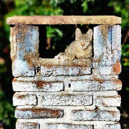 freetoedit gato gatoenchimenea gatosbonitos