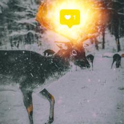 deer mammal reindeer wildlife fauna freetoedit