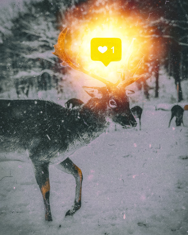 𝐃𝐑𝐀𝐖𝐈𝐍𝐆, 𝐄𝐃𝐈𝐓𝐈𝐍𝐆 𝐏𝐇𝐎𝐓𝐎𝐒 & 𝐋𝐎𝐆𝐎 𝐃𝐄𝐒𝐈𝐆𝐍##deer #mammal #reindeer #wildlife #fauna #snow #winter #freezing #antler #snout #white #weather #instagood #photography #instawinter #nature #frost #skies #blizzard #sky #ice #snowfall #snowing #instasnow #chilly #instapic #frosty #photooftheday #cold #snowflakes  #freetoedit
