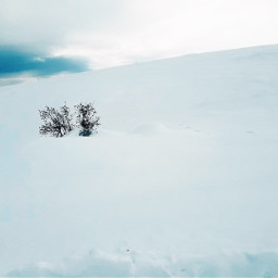freetoedit snow tree remixit sky pcthebestplace pcsnowyslopes snowyslopes