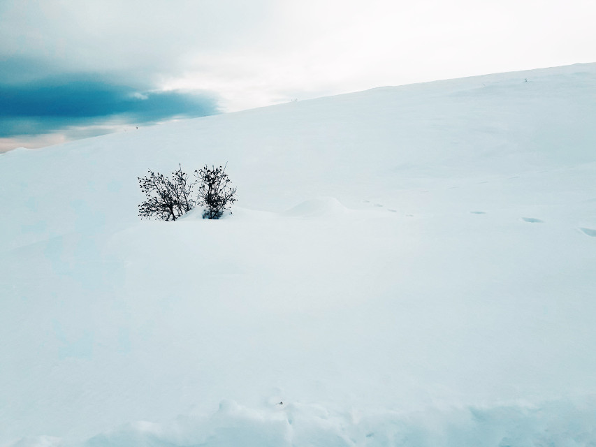 #snow #tree  #freetoedit #remixit #sky #white #pcthebestplace #thebestplace