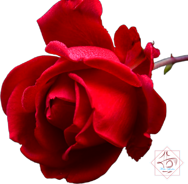 #rose #redrose #beautiful #flower #red #fabulous #cute #Sweet #tbgraphics #nice #picsart #free #freetoedit #sticker #rosesticker #remix #freesticker #challenge