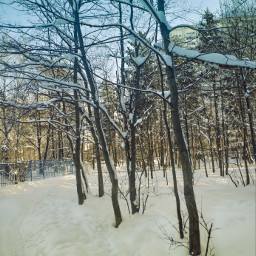 freetoedit sunny winter myphoto remixit