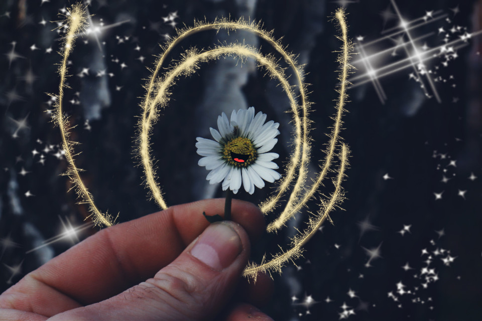 Have a Happy Monday my fellow picsartist's #daisy #flower #stickers #happiness #lightmask  #freetoedit