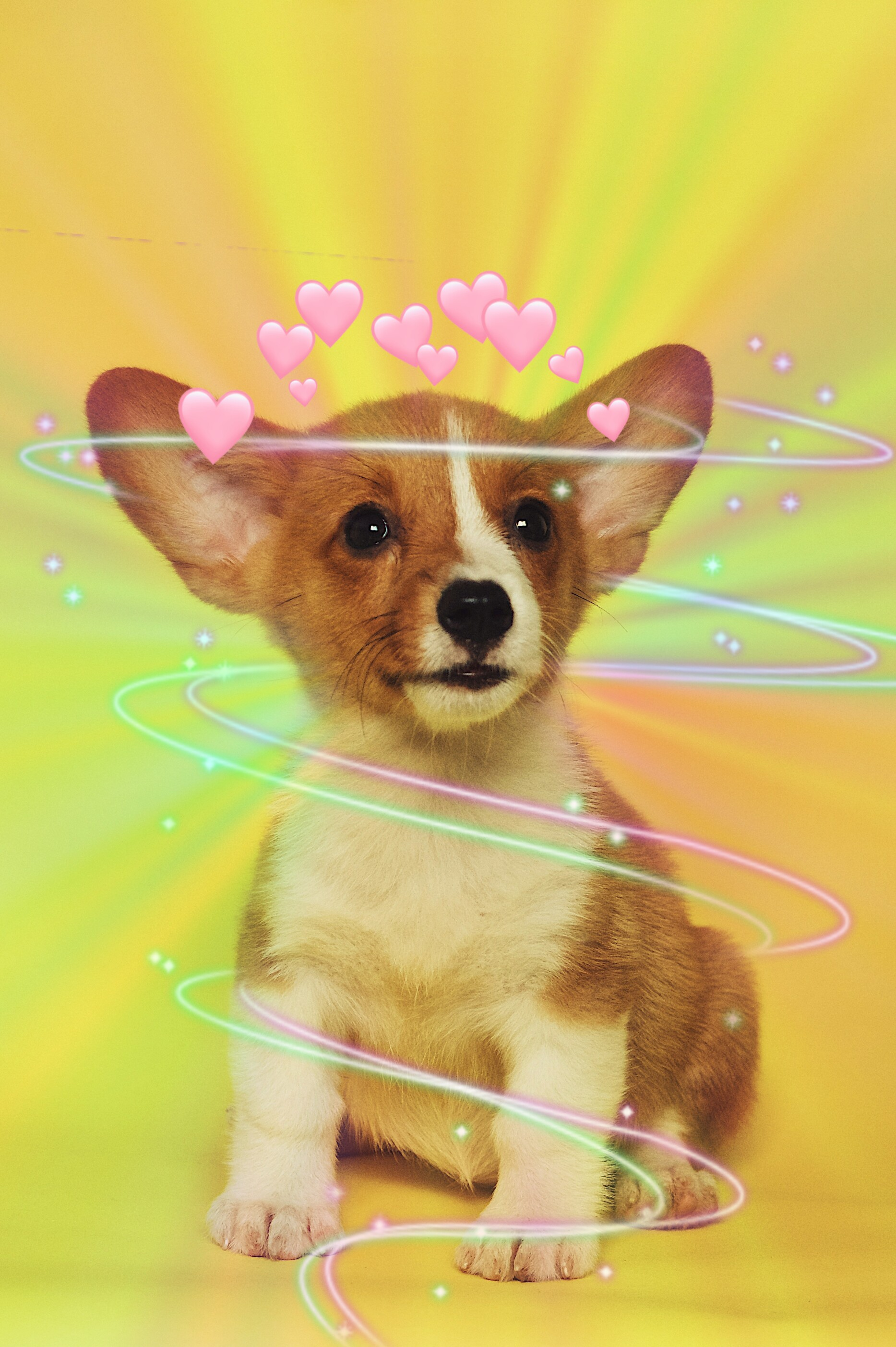 freetoedit challenge like sweet cute dog edit vote happ