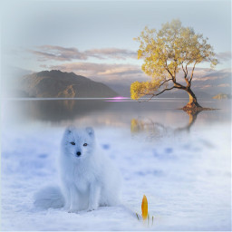 snowscape dog white whitedog krokus freetoedit