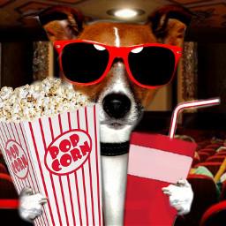 freetoedit cine cinema perro dog ircpopcorn