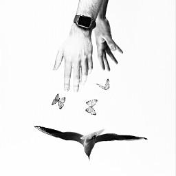 freetoedit free hands butterflies birds