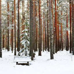 trees forest snow winter