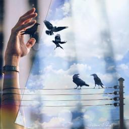 freetoedit sky ravens odd stormeday ircreachingout