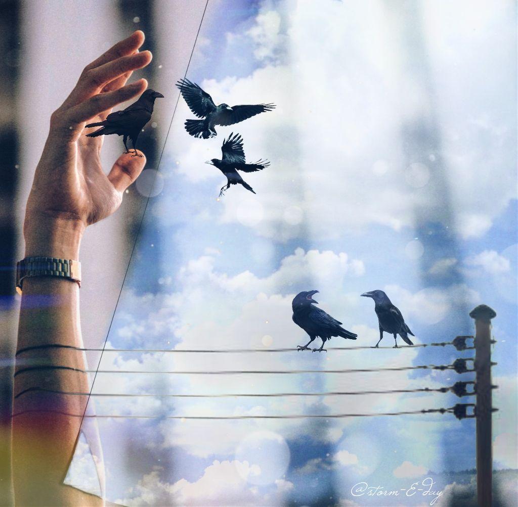 #freetoedit #sky #ravens #odd #stormEday  #storm-E-day