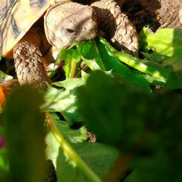 freetoedit turtle pcpetsofpa petsofpa