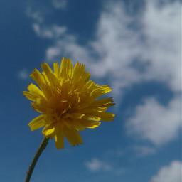 flower summer pcdominantlyblue dominantlyblue