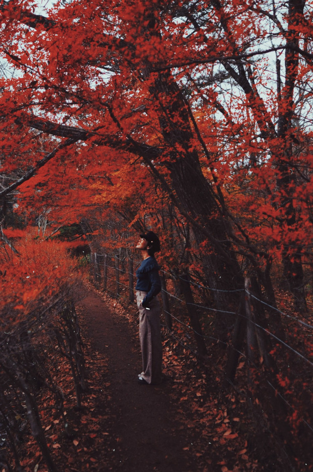 Japan, I shall be back someday soon..  #freetoedit #winter #autumn #japan #realpeople #nature #portrait