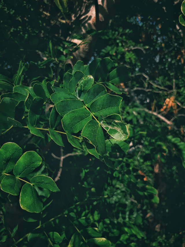 #freetoedit #tree #nature #green #vegetation #arbol #natural #naturaleza #verde #vegetacion #greenish #verdosa #flower #leaf
