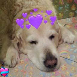 mydog ilovehimsomuch|timon freetoedit ilovehimsomuch