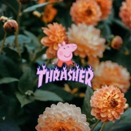 freetoedit trashermagazine peppa-pig peppa