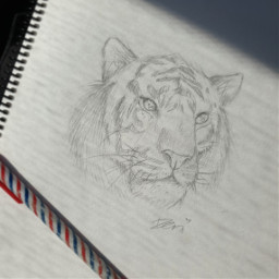 sketch tiger bigcat tradionalart drawing freetoedit