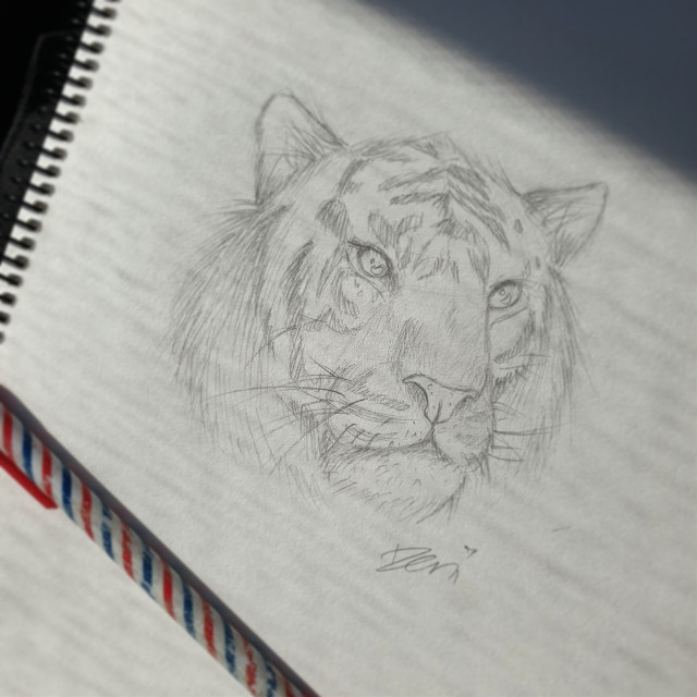 First day back at uni done and dusted😴😴 Sketched this big kitty cat on the train ride in the morning. Imma start doing daily sketches to get warmed up✍🏻 #sketch #tiger #bigcat#tradionalart #drawing #art #tradionaldrawing #pencil #pencildrawing #illustration    #freetoedit