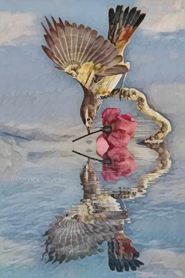 #editbyme #photomanipulation #bird #rose #mirror #art #artwork