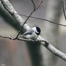 freetoedit nature photography photographybyme myphotography