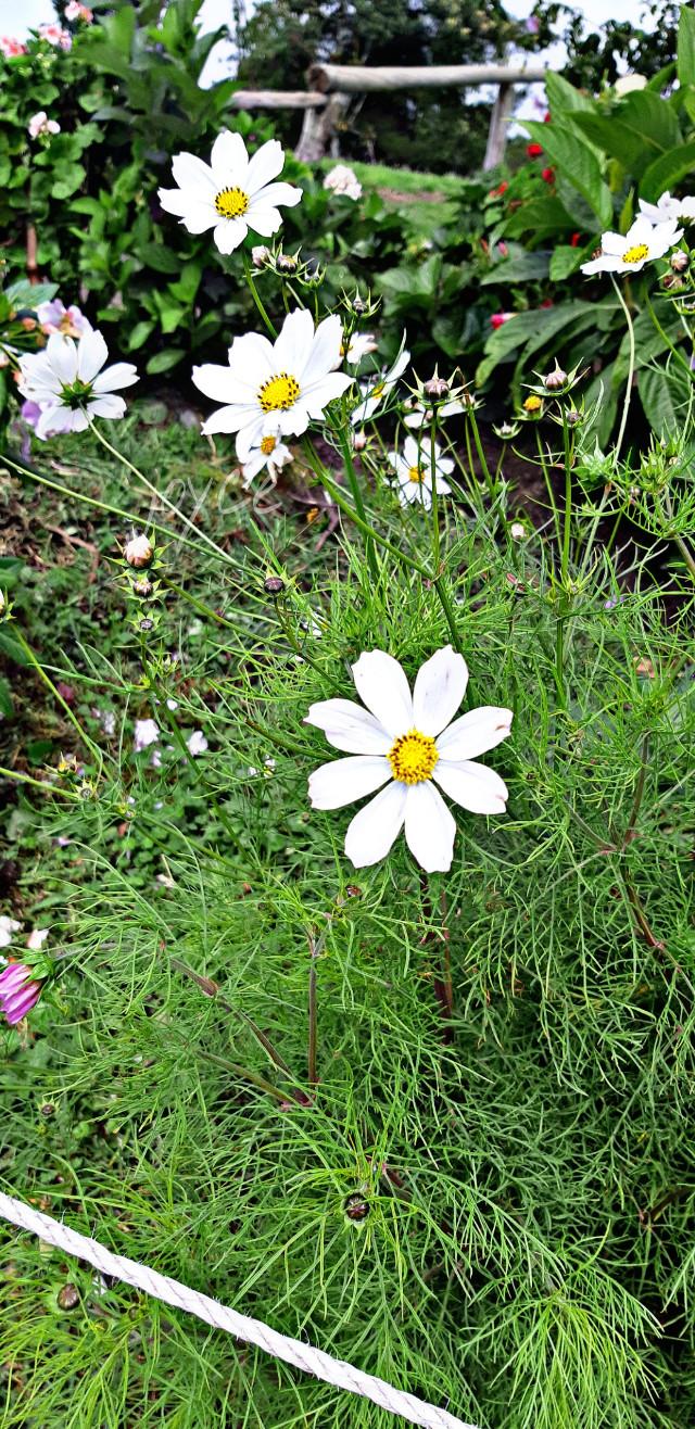 Belleza, #flower #nature #beautiful #ecosystem