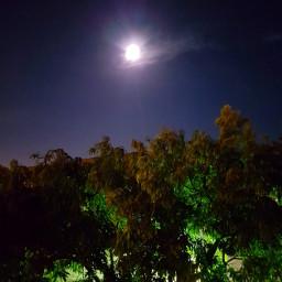 moonlight night treelove peace hope