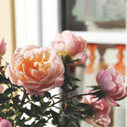 tb throwback flower flowerphotography cute freetoedit