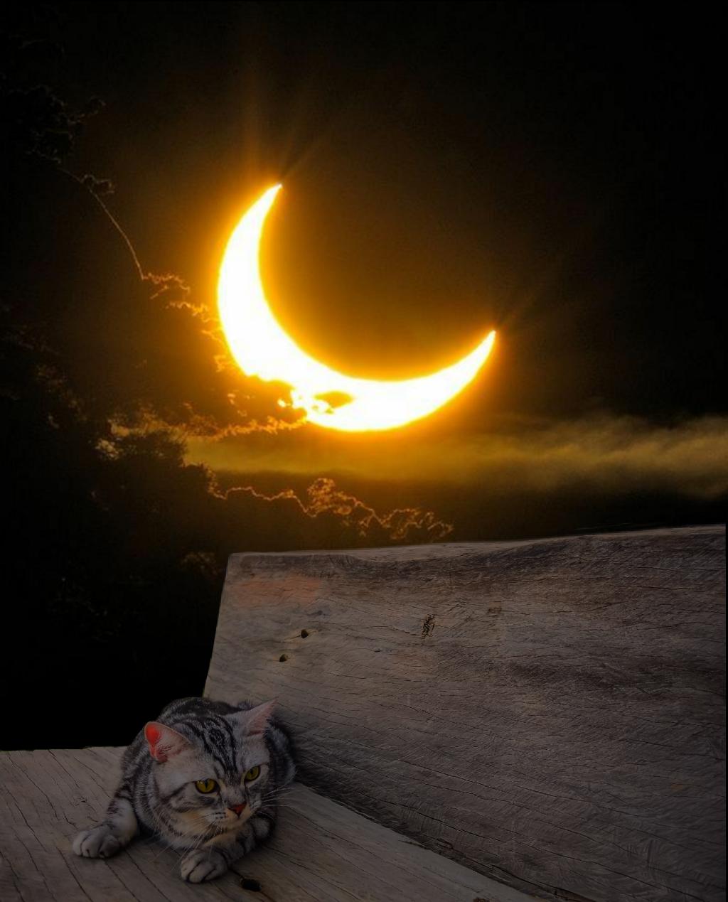 #freetoedit @pa @freetoedit #myedit #madewithpicsart #moon #cat