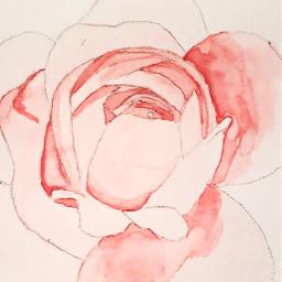 peony peonia peonyflower watercolor pink freetoedit