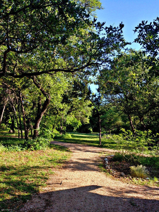Thinking about Spring. Pensando en primavera. 🌿🍃💚🌳  #spring #trees #nature #paths #naturelover #austin #texas #myphotography #mylife