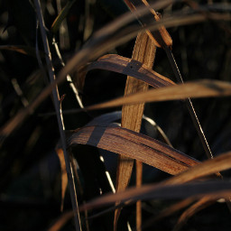 freetoedit contrast grasses photography lightsandshadows
