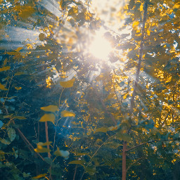 freetoedit picsar sol