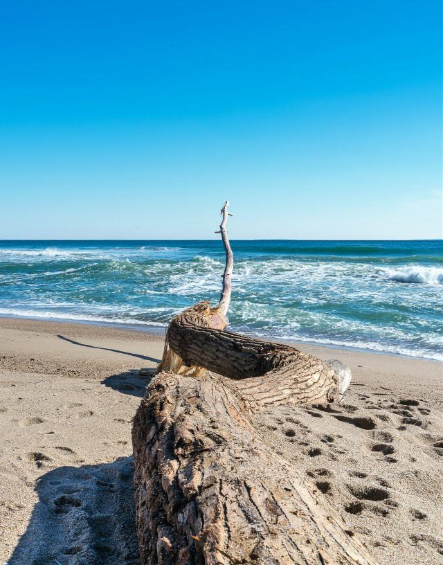 #freetoedit #naturephotography #ocenbeach #winter #february #driftwood