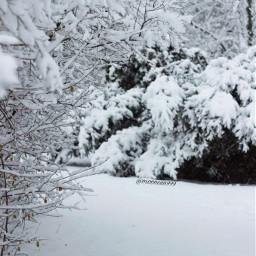 freetoedit photography myclick winter snow